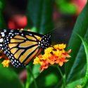 Butterflies Up Close