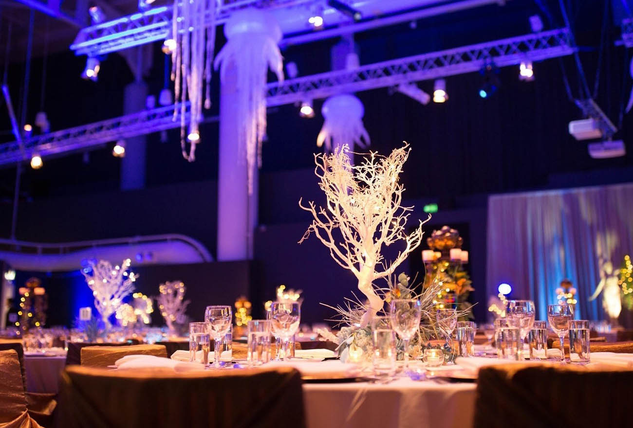 Blueberry Events hire & design in Sydney